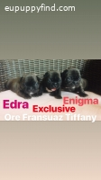 French bulldog puppies for reservation